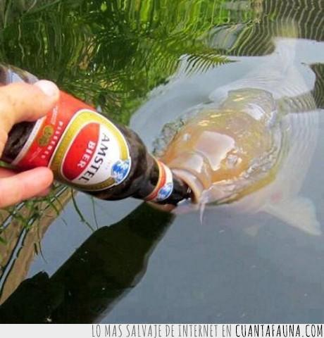 agua,beber,cerveza,mar,peces,pez,río