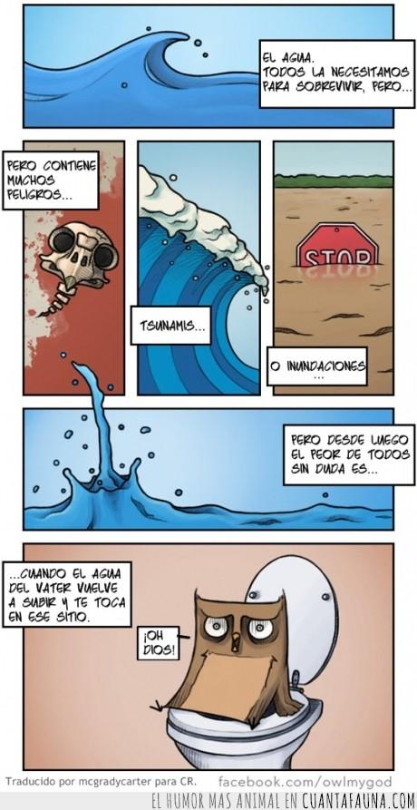 agua,búho,inundación,owlmygod,tsunami,vater,wc