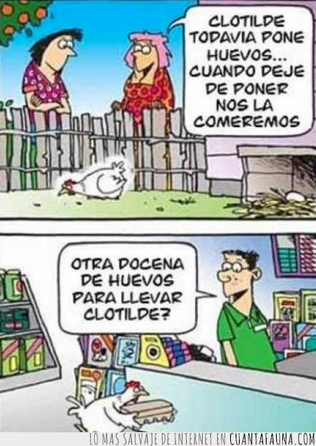 Clotilde,comprar,docena,gallina,gallina lista,huevos