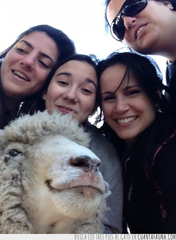 Animales Sin Hogar,Oveja,Selfie,Uruguay