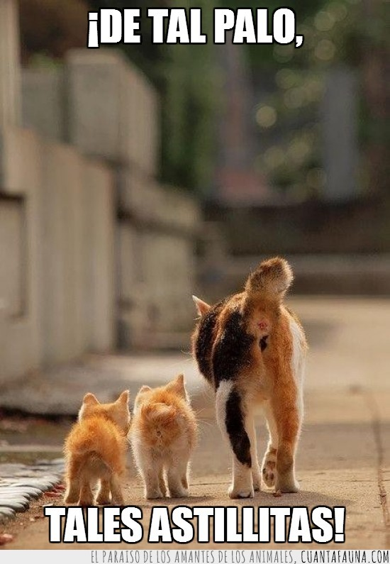 andar,cachorros,calle,Gata,gatitos,genética,heredar,hijos,madre,parecido,razonable,refrán