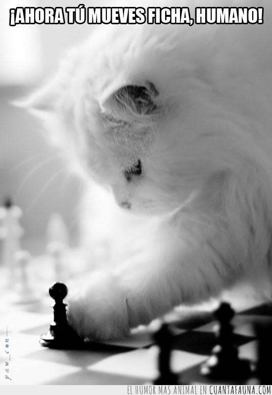 ajedrez,astucia,blancas,ficha,fichas,ganar,Gato,inteligencia,juego,mesa,mover,negras,peón,perder,tablero,turno