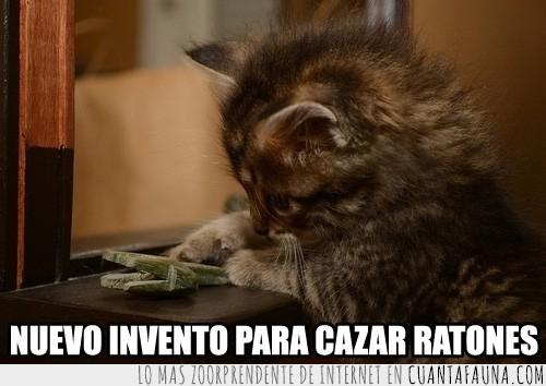 cazar,enemigos,Gato,idear,investigar,ratones,trampa