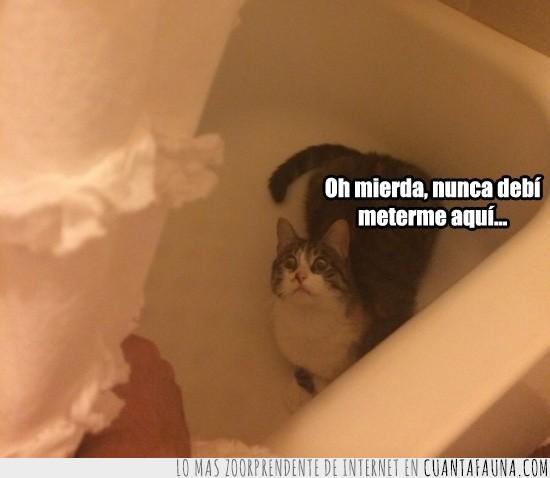 ducha,Gato,horror,tú mismo te has cavado tu propia tumba