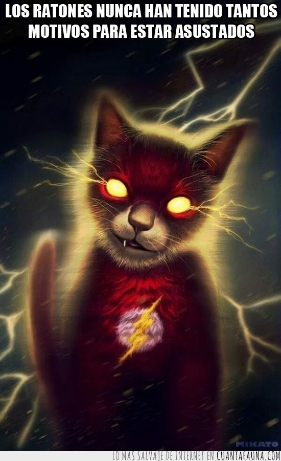 flash,gato,rapidos,ratones,superheroe,veloces