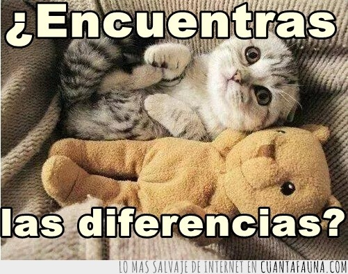 diferencias,gato,juntos,osito,peluche,peluchito