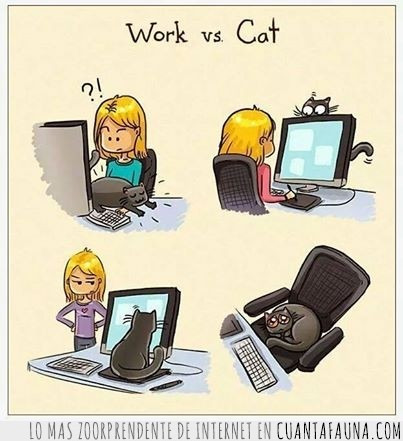 competir,ganar,gato,ternura,trabajar,trabajo