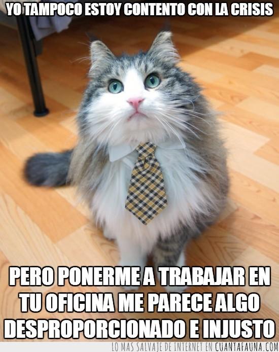 corbata,crisis,gato,injusto,oficina,trabajar,trabajo