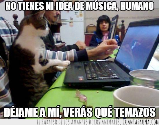 dj,gato,ordenador,portatil,reproductor de windows media