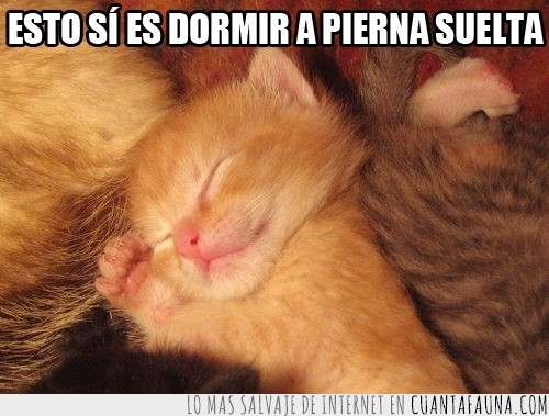 caramelo,color,descripción,dormir,expresión,gatito,Gato,gráfica,pierna,suelta,tranquilidad