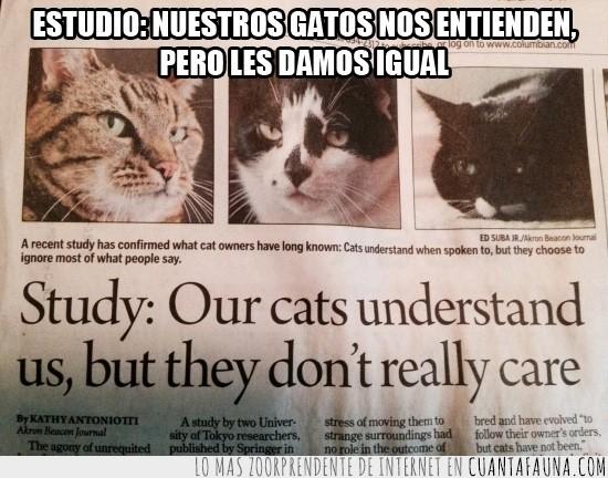 Entender,Estudio,Gatos,No Importar,Titular