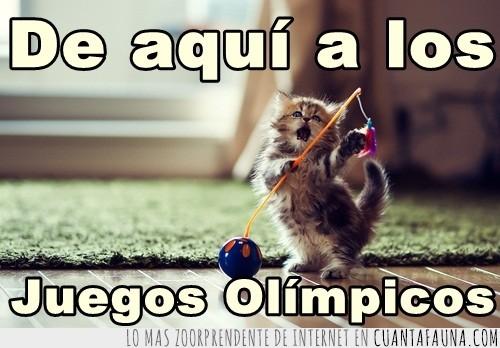 gato,Juegos Olímpicos,jugando,pertiga