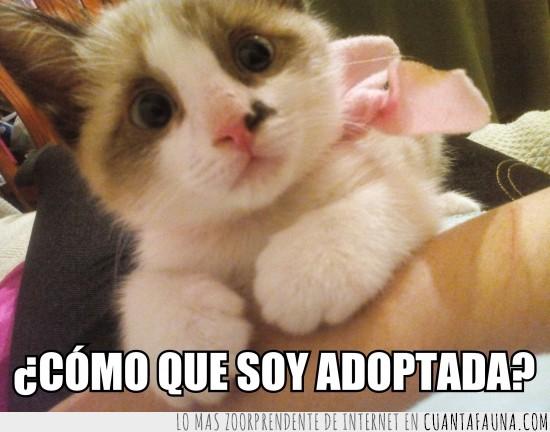 adoptada,madre,mirada,preguntar