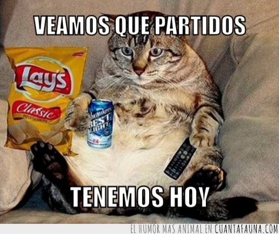brasil 2014,cerveza,Gato,mando,mundial,partido,patatas,tele,todo preparado