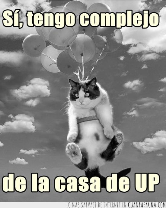casa,complejo,Gato,globos,UP