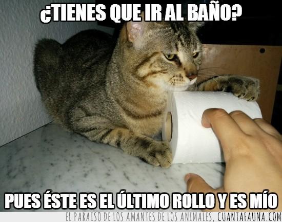 aguantar,gato,mío,papel higienico,quedarse,rollo