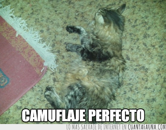 camuflaje,gato,mi gordito,tapete con patas