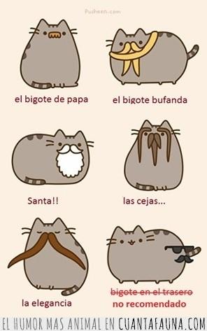Barba,Bigote,Estilos,Felinos,Gato,Gatos