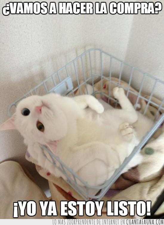 canasta,cesta,cesto,compras,gato