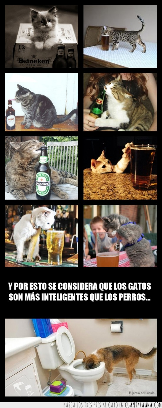 beber,cerveza,gatos,listos,perros,toilet,tontos,wc