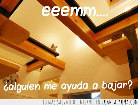 ayudar,bajar,encima,pedir ayuda,subido,techo,viga