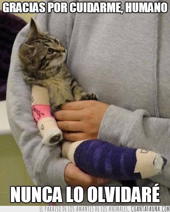 cuidar,fractura,gatito,gracias,hospital,humano,nunca olvidar,vendado,vendaje