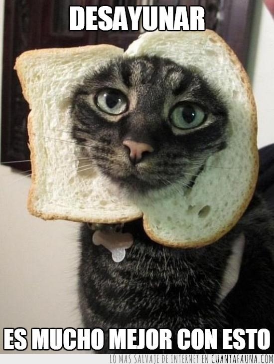 collar,desayunar,desayuno,gato,pan