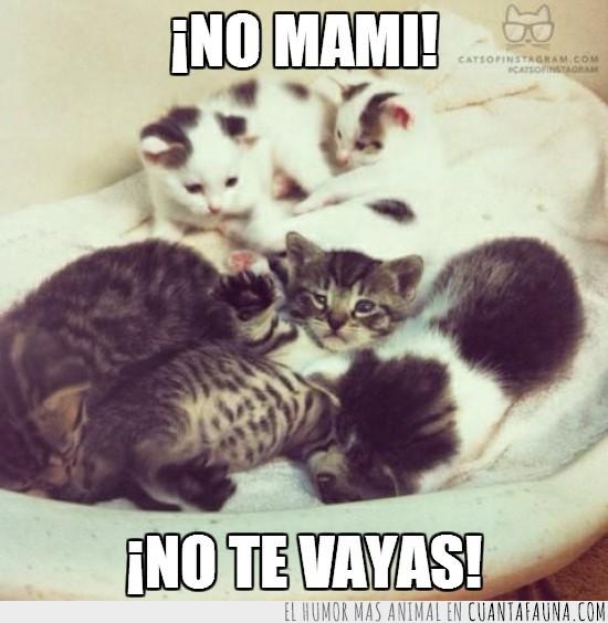 camada,gatitos,irse,madre,no