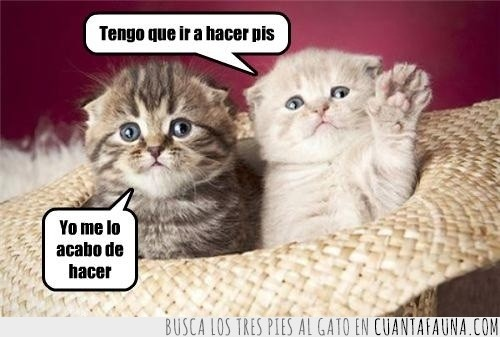 gatitos,pipi,pis,sombrero,tarde