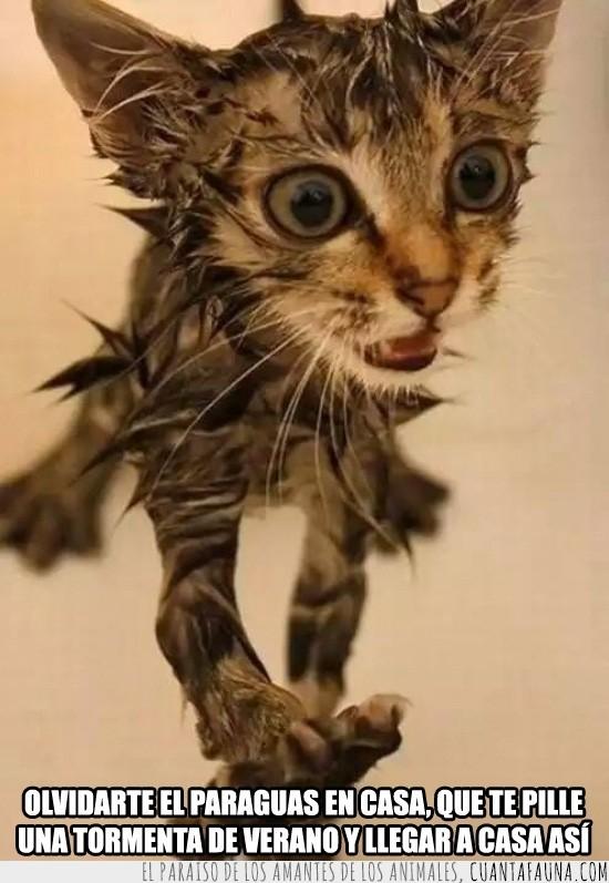 gatito,lluvia,mojado,olvidar,paraguas