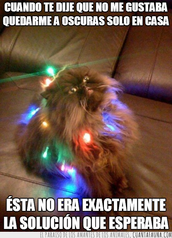 el gato se vengará,gato,luces,merecer,pelos,piel,pobre,porque,traumatizado