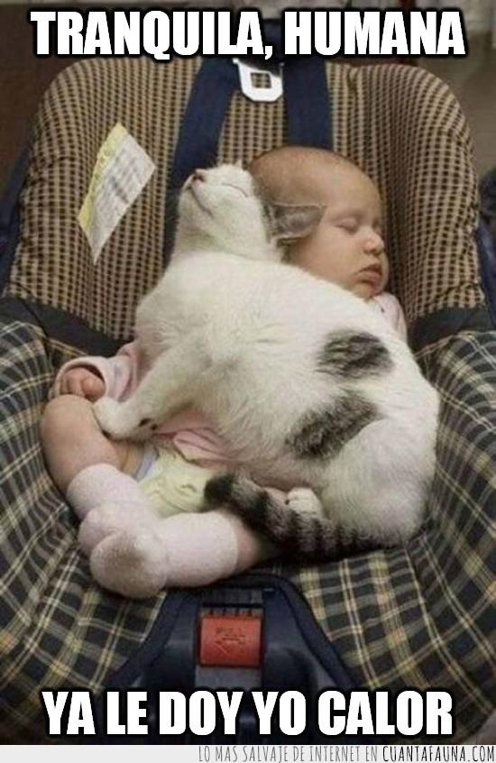 bebé,frío,gato,mimos,tapar,ternura