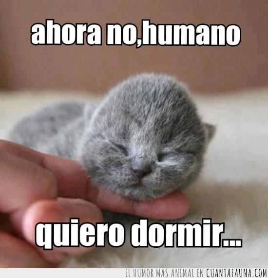 cachorro,muy pequeño,quiero dormir