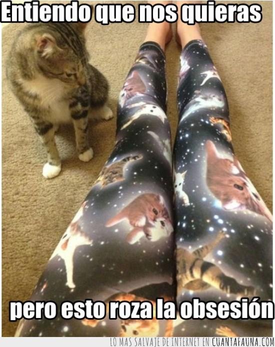 gato,gatos,leggins,mallas,obsesión,Pantalones