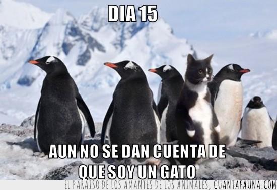 antartida,artico,aun no se han dado cuenta,gato,hielo,intruso,nieve,pingüinos