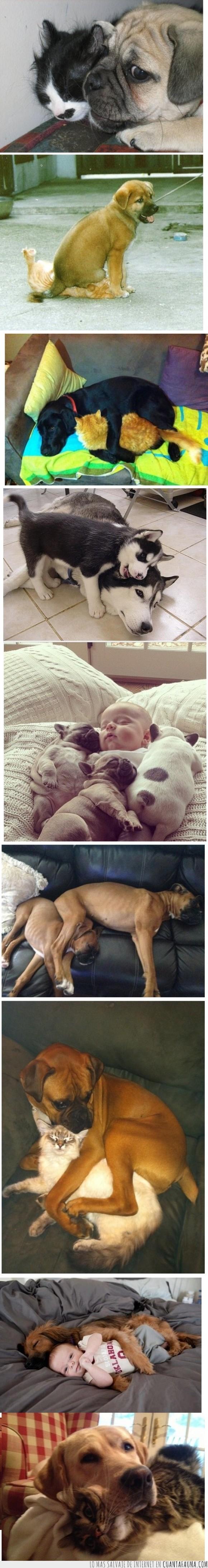 bebe,encima,espacio personal,gato,GET OFF OFF ME DOGGA,molestar,perro,pugs