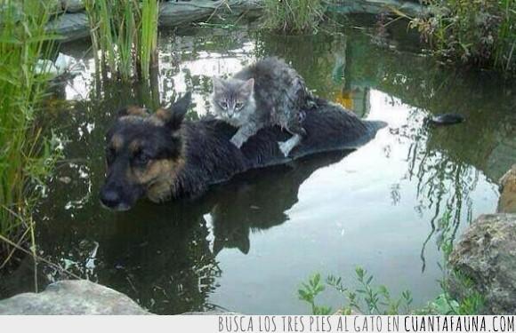 encima,Esperanza,Gato,Inundación,Paraguay,Perro,salvar