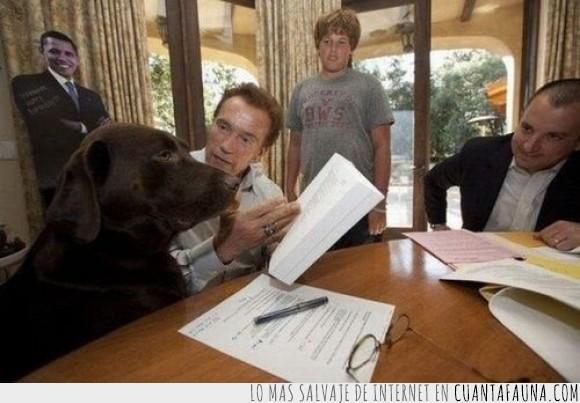 arnold schwarzenegger,factura,FIRULAIS  D:,gobernator,hasta la vista doggy,perras,perro,recibo,sayonara doggy