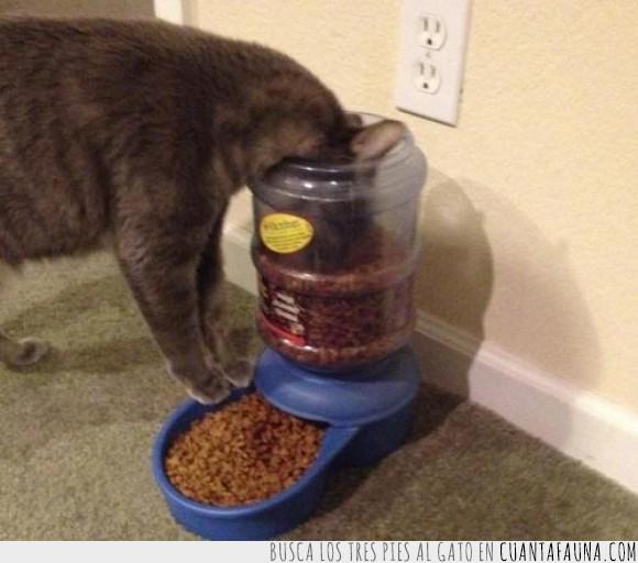 bote,comer,dispensador,fácil,gato,grande,modo,opción,plato