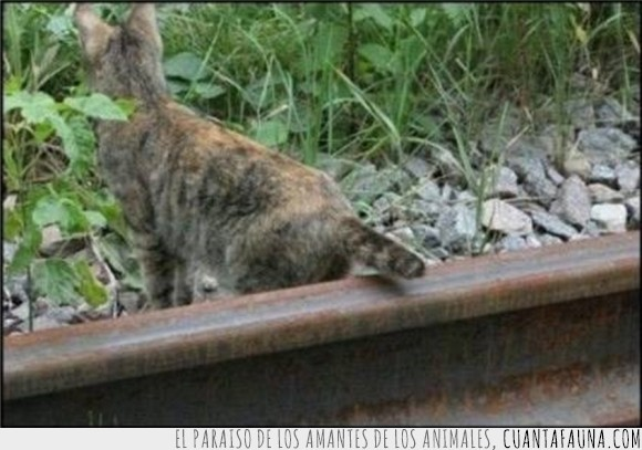 cola,cortar,gato,lección,vías de tren,vida