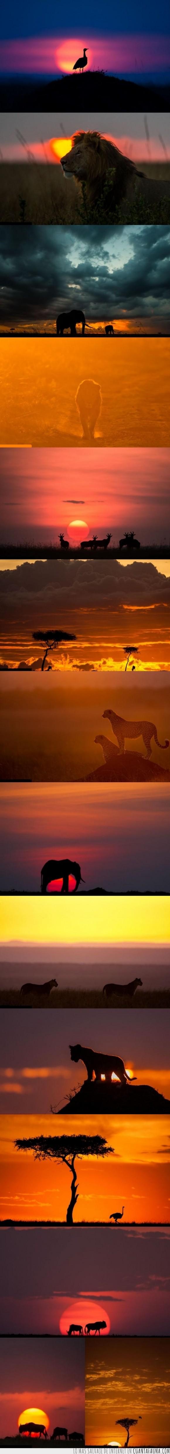 África,amaneceres,animales,atardeceres,avestruz,elefante,gacela,guepardo,impresionante,león,Masai Mara,ñu,Paul Goldstein