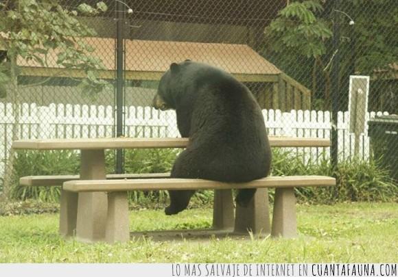 merendero,mesa,Miel,Oso,pardo,parque,Pensar,triste