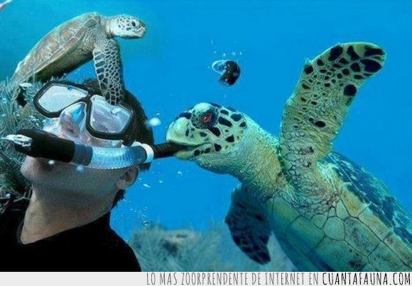ahogar,boca,bucear,buzo,matar,miedo,porder,respirador,respirar,tortuga,tubo