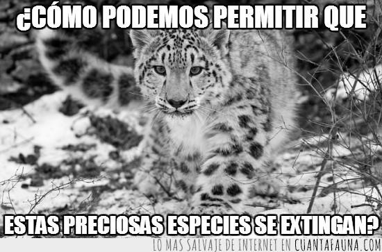 ambiente,cuidemos,extinguir,leopardo,nieve,pocos ejemplares,precioso