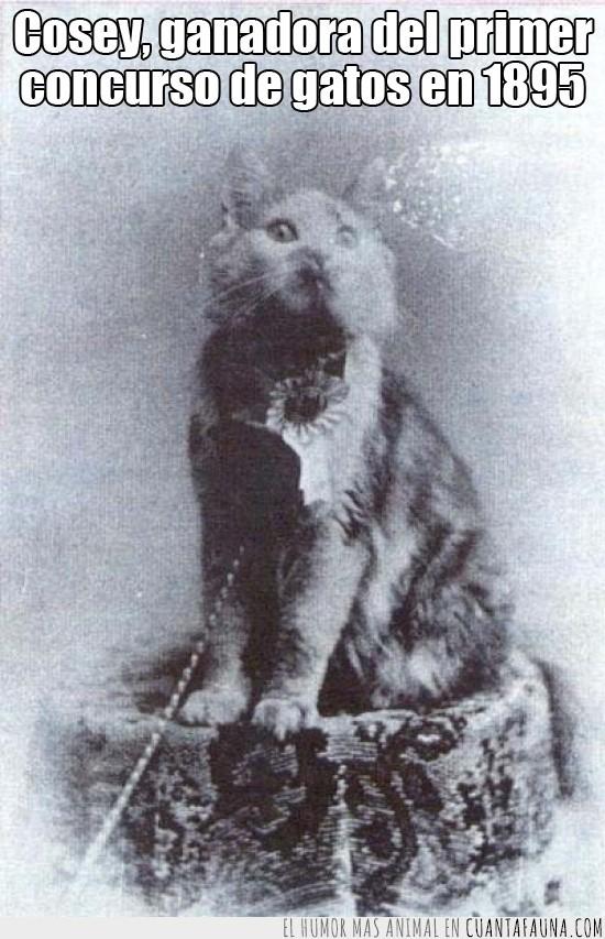 1895,Cosey,foto para la posteridad,ganadora,gato,Maine Coon,Nueva York