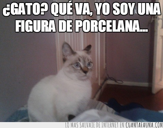 blanca,dentro,figura de porcelana,gata,ojos azules