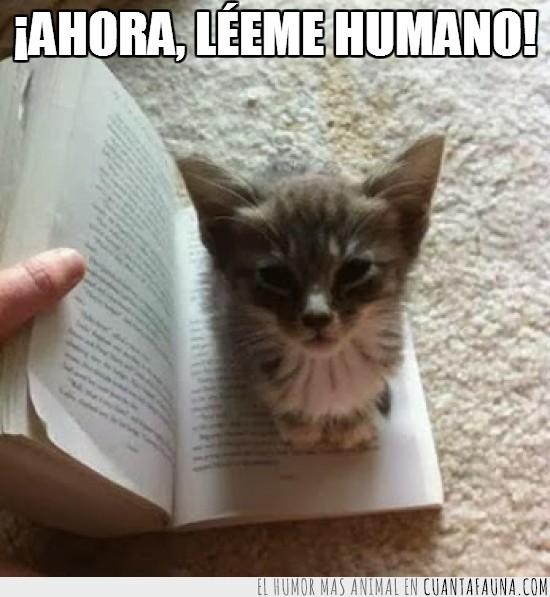 atención,gatito,leer,libro,poner en medio,y así está todos los días