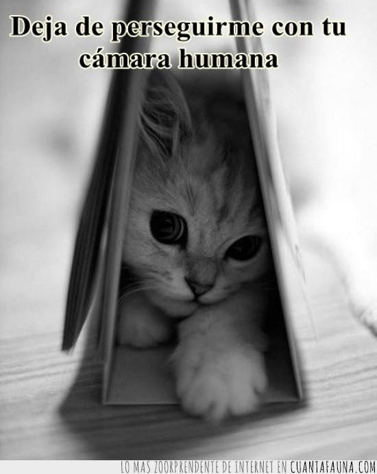 calendario,esconder,esconderse,escondido,humana,perseguir