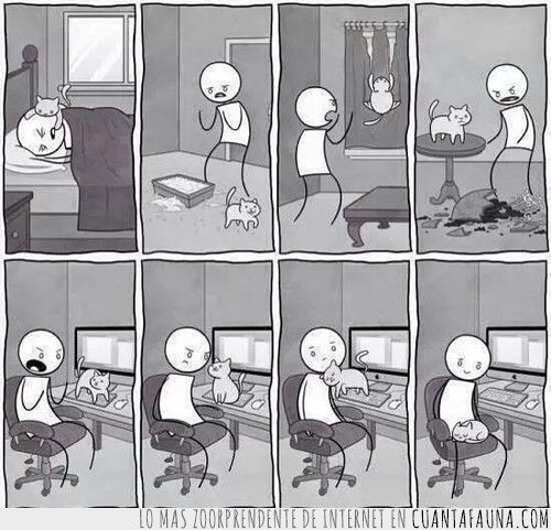 comic,enfadarse,gato,humano,teclado