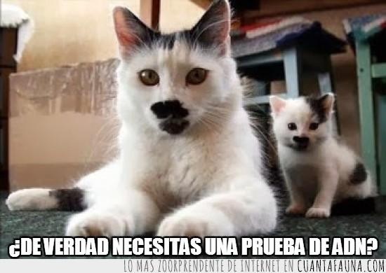 bigote,gatitos,heredar,hijo,padre,pelo,refrán
